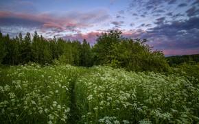 Picture summer, landscape, nature, the suburbs