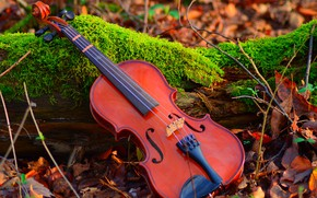 Picture autumn, leaves, light, nature, music, mood, foliage, violin, moss, log, musical instrument, twigs, composition, autumn, …
