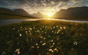 Picture grass, the sun, landscape, sunset, mountains, nature, river, tundra, Ural, The Arctic, cottongrass, Rev Alex