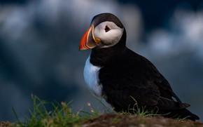 Picture the dark background, bird, stalled