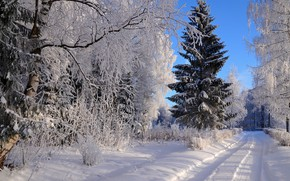 Picture winter, frost, road, forest, the sky, light, snow, trees, branches, nature, blue, in the snow, …