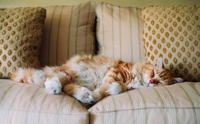 Picture cat, sofa, sleeping, red