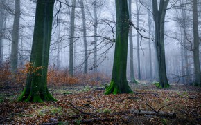 Picture autumn, forest, trees, branches, fog, trunks, foliage, morning, falling leaves, the bushes, naked, driftwood