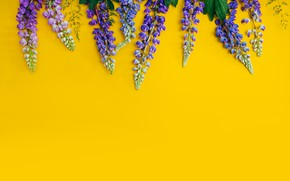 Picture flowers, yellow, background, yellow, flowers, purple, lupins, lupine
