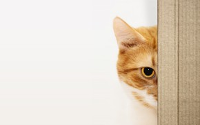 Picture cat, cat, look, face, eyes, box, portrait, red, white background, Peeps, картонка