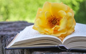 Picture rose, book, yellow, bokeh, composition, timber