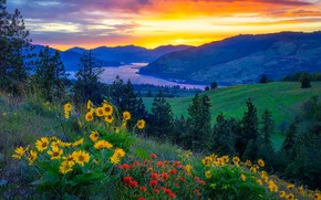 Picture summer, sunset, flowers