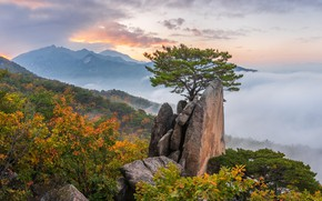 Picture autumn, clouds, landscape, mountains, nature, fog, tree, rocks, dawn, morning, forest, pine, South Korea, reserve, …