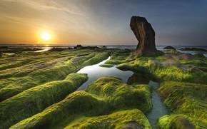 Picture sea, greens, the sky, the sun, algae, landscape, sunset, nature, rock, stones, dawn, shore, coast, …