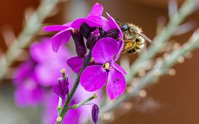 Picture flowers, bee, bumblebee