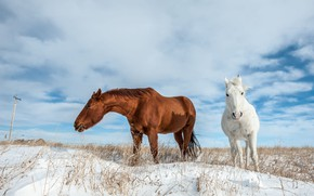 Picture winter, field, white, the sky, clouds, snow, nature, blue, horse, horse, horses, horse, red, pair, …
