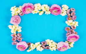 Picture flowers, flowers, frame, background, roses, white, blue background, pink, white, roses, fresh, buds
