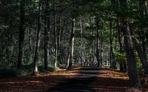 Picture road, nature, Park