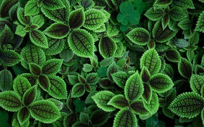 Wallpaper greens, leaves, background, bokeh