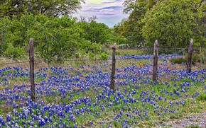 Picture flowers, HDR, spring, meadow