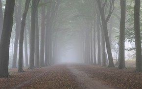 Picture autumn, forest, trees, nature, fog, trunks, morning, alley, cool