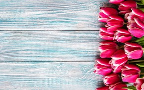 Picture background, blue, tulips, pink