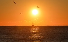 Picture sea, the sky, the sun, birds, sunrise, ship, sailboat, horizon, Spain, Barcelona, Barcelona, Catalonia