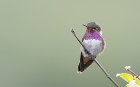 Picture branch, Hummingbird, baby