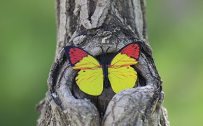 Picture background, tree, butterfly