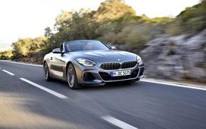 Picture road, grey, vegetation, speed, BMW, Roadster, roadside, BMW Z4, M40i, Z4, 2019, G29