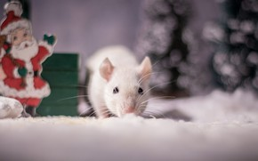 Picture winter, mustache, look, snow, background, holiday, eyes, blur, mouse, mouse, muzzle, New year, white, animal, …