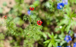Picture flowers, wildflowers, garden