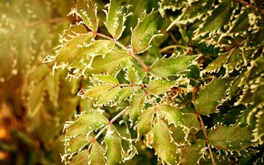 Picture cold, frost, greens, autumn, leaves, the colors of autumn, freezing