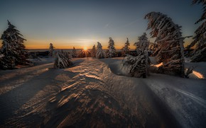 Picture winter, the sun, snow, tree, Robert Didierjean