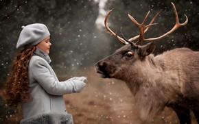 Picture snow, nature, animal, deer, girl, Valentine Ermilova