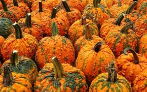 Picture autumn, nature, pumpkin