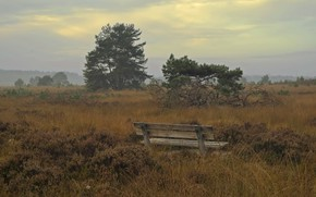 Picture field, autumn, bench