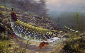 Picture river, figure, fish, picture, art, painting, under water, pond, baubles, pike, bait, Rick Kelley