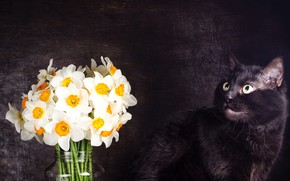 Picture cat, cat, look, flowers, pose, the dark background, black, bouquet, muzzle, daffodils, Studio