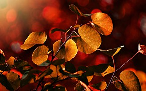 Picture autumn, light, branches, bright, red, bokeh, autumn leaves