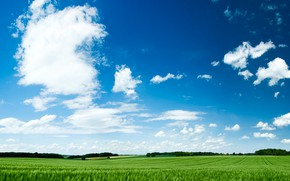 Picture field, summer, grass, clouds, nature, dal, horizon, meadow
