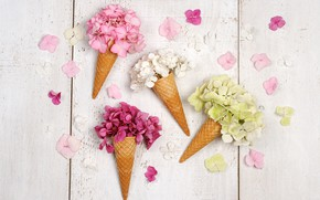Picture white, flowers, background, horn, wood, waffle