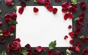 Picture roses, frame, petals, red, petals, roses, frame, floral
