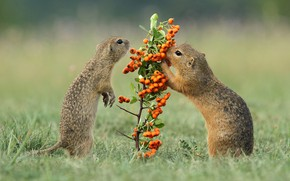 Picture grass, look, pose, berries, glade, legs, branch, animals, fruit, pair, a couple, Duo, lawn, two, …