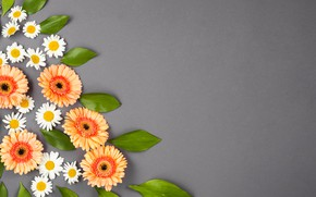 Picture flowers, grey background, flower, decor, composition