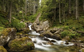 Picture forest, river, waterfall, stream