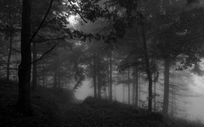 Picture forest, trees, nature, fog, black and white, monochrome, path