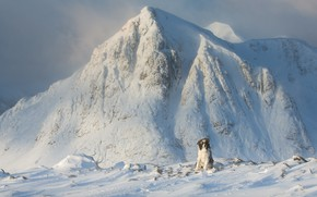 Picture dog, cold, snow, winter, frost, mountains, snowy peaks, sitting, the border collie, stones