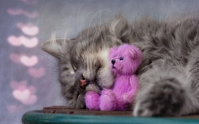 Picture cat, cat, face, pose, grey, pink, toy, sleep, nose, bear, sleeping, hearts, lies, Teddy, bokeh