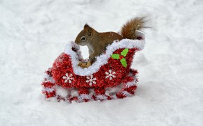 Picture winter, animals, snow, new year, protein, nuts, new year, sleigh, animals, winter, background, snow, animal, ...