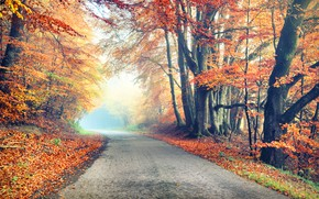Wallpaper road, autumn, forest, leaves, trees, Park, forest, road, landscape, park, autumn, leaves, tree, country, fall