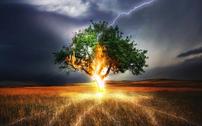 Picture TREE, GRASS, The SKY, FIELD, CLOUDS, CATEGORY, LIGHTNING, The STORM