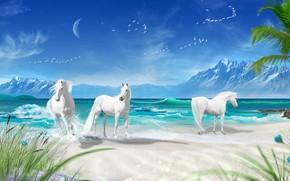 Picture nature, horse, white