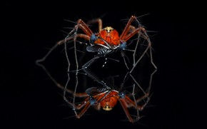Picture nature, background, spider