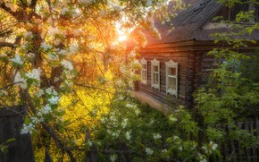 Picture the sun, house, tree, village, flowering
